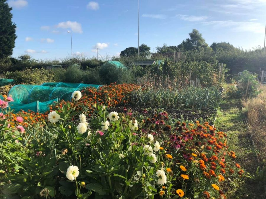 Coven Heath Allotments