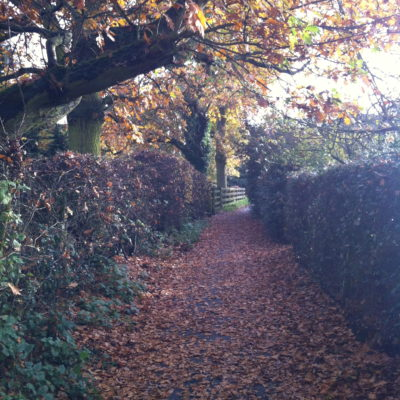 Autumn In Cow Lane Coven - Click to open full size image